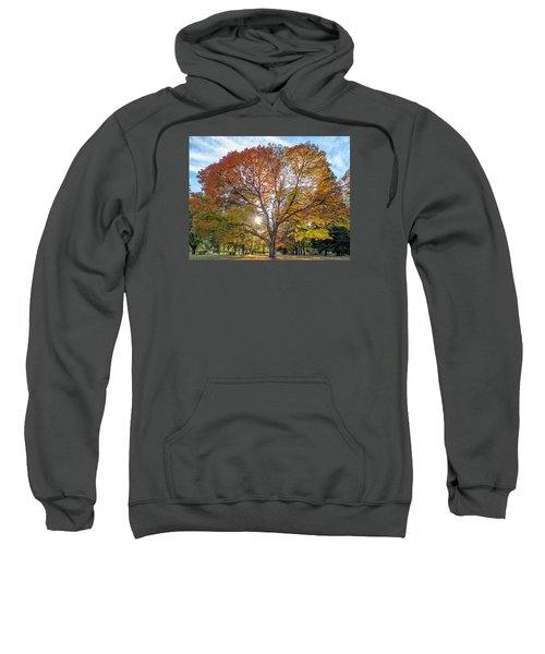 Autumn Maple Sweatshirt