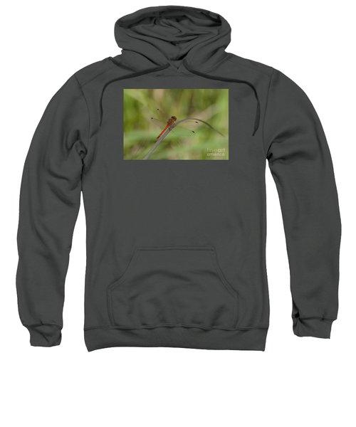 Autumn Meadowhawk Sweatshirt