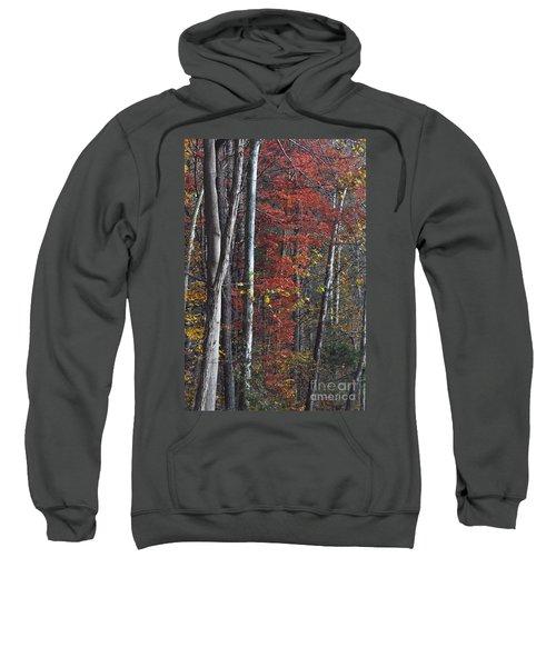 Autumn Trees 8261c Sweatshirt
