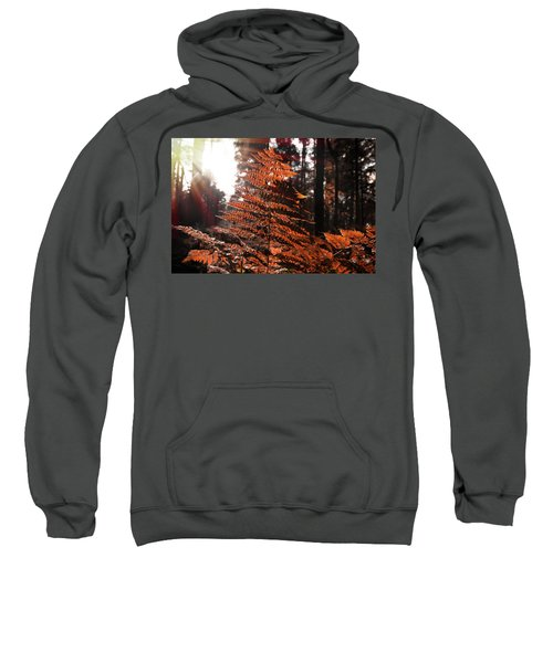 Autumnal Evening Sweatshirt