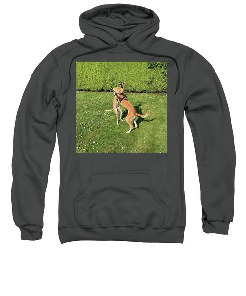 Ava The Saluki And Finly The Lurcher Sweatshirt by John Edwards