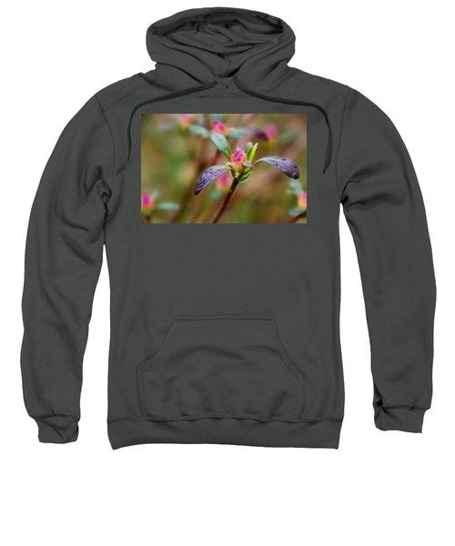 Azalea Bud Energy Sweatshirt