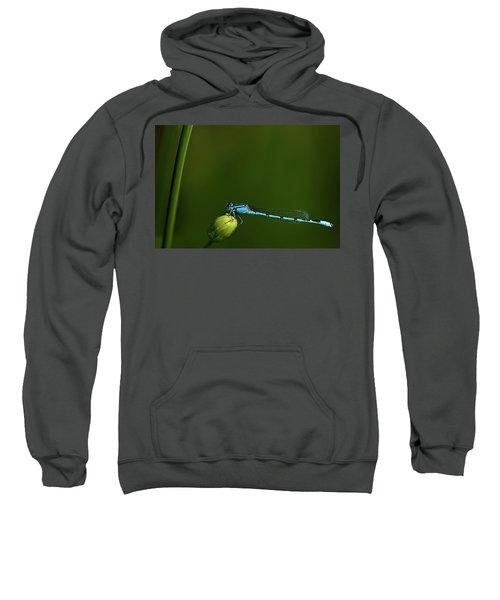 Azure Damselfly-coenagrion Puella Sweatshirt