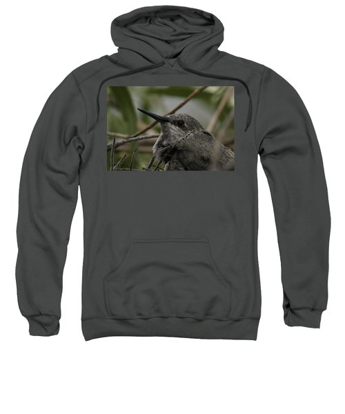Baby Humming Bird Sweatshirt