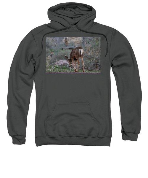 Back Into The Woods Sweatshirt