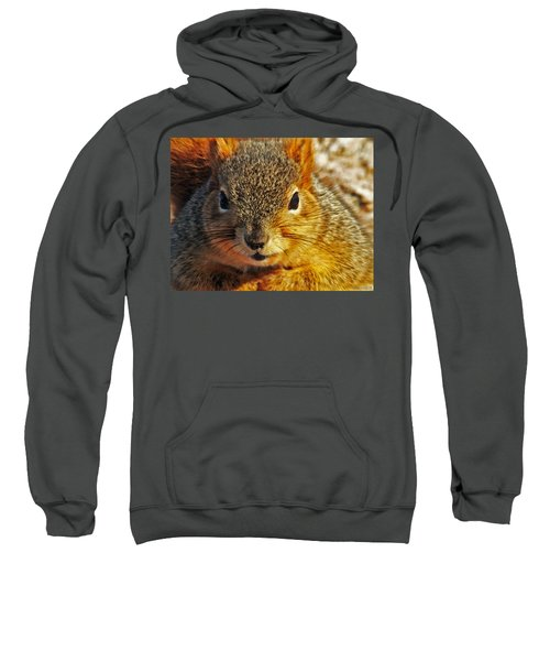 Backyard Squirrel Sweatshirt