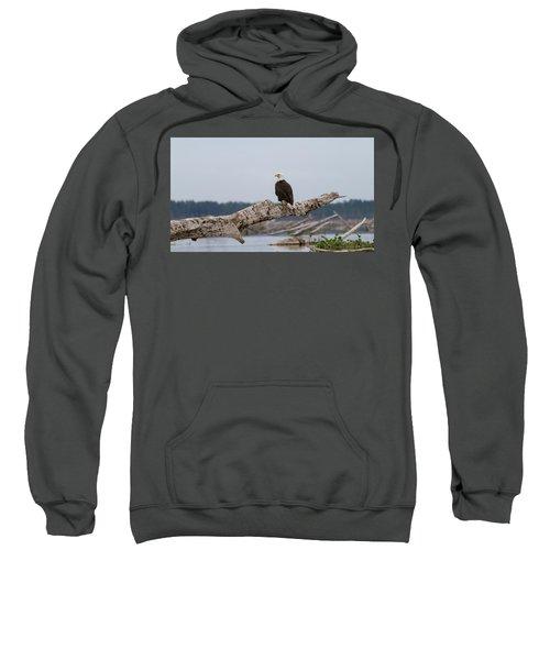 Bald Eagle #1 Sweatshirt