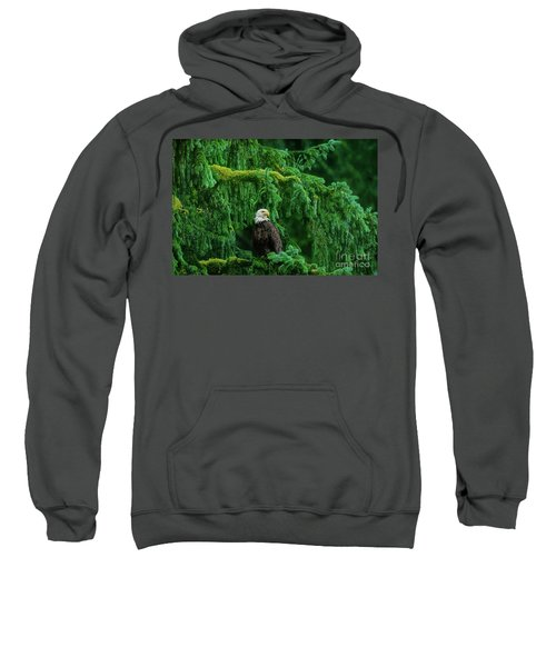 Bald Eagle In Temperate Rainforest Alaska Endangered Species Sweatshirt