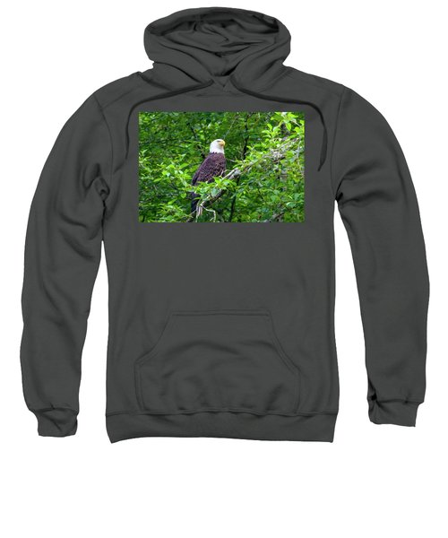 Bald Eagle In Tree Sweatshirt
