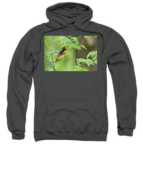 Baltimore Oriole Sweatshirt by Michael Peychich