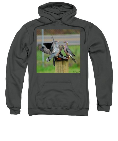 Band-tailed Pigeons #1 Sweatshirt