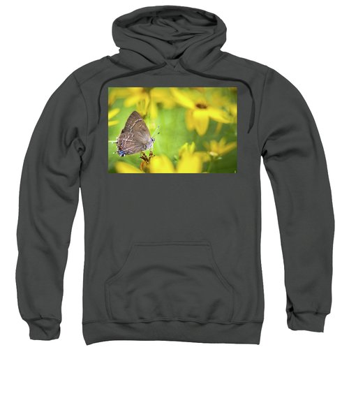 Banded Hairstreak On Coreopsis Sweatshirt