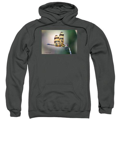 Banded Pennant Sweatshirt
