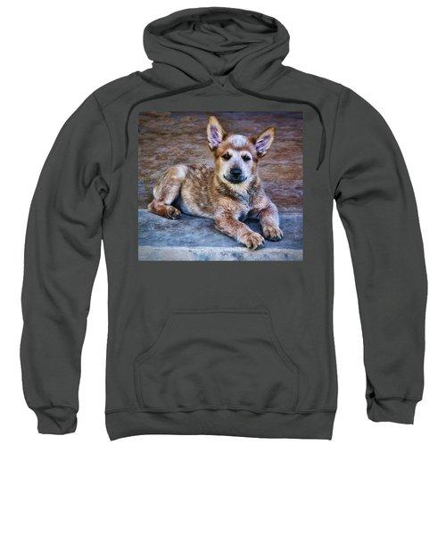 Bandit  Sweatshirt