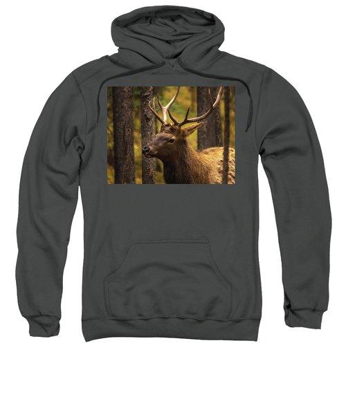 Banff Elk Sweatshirt