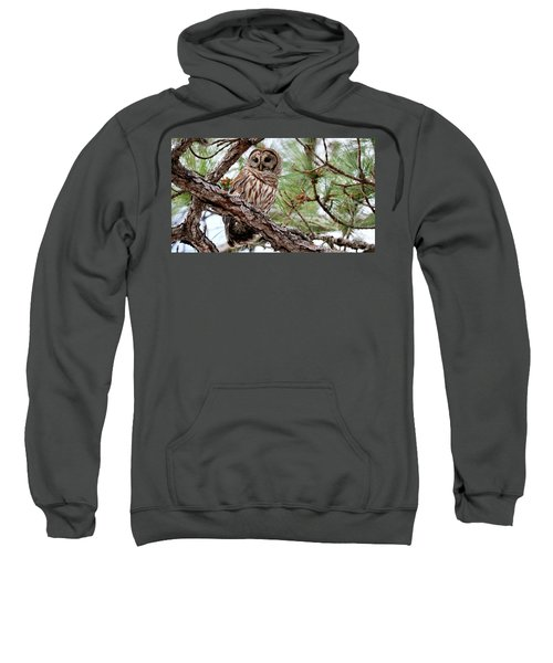 Barred Owl On Tree Branch Sweatshirt