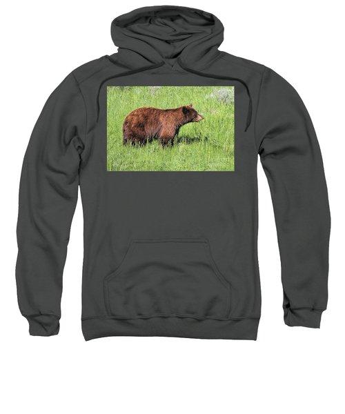 Bear Eating Daisies Sweatshirt