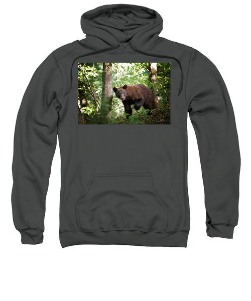 Bear In The Woods Sweatshirt