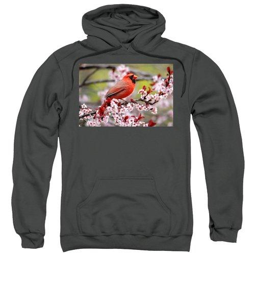 Beautiful Northern Cardinal Sweatshirt