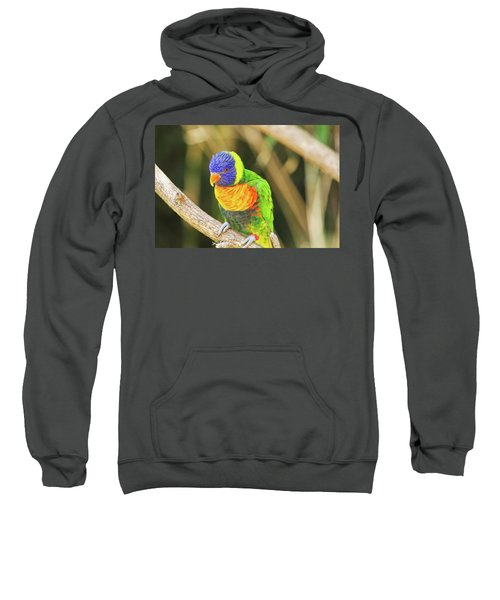Beautiful Perched Mccaw On A Branch. Sweatshirt
