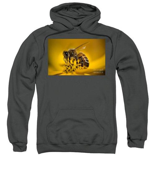 Bee Enjoys Collecting Pollen From Yellow Coreopsis Sweatshirt
