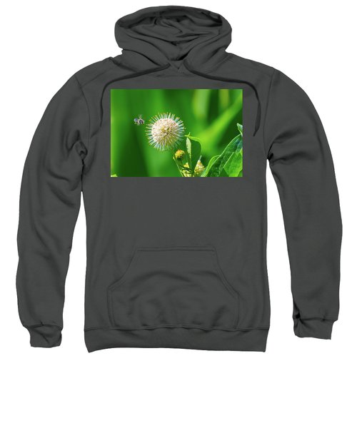 Bee World Sweatshirt