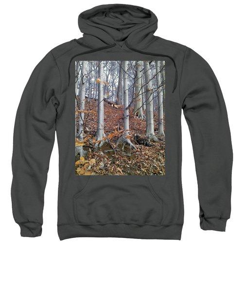 Beech Trees Sweatshirt