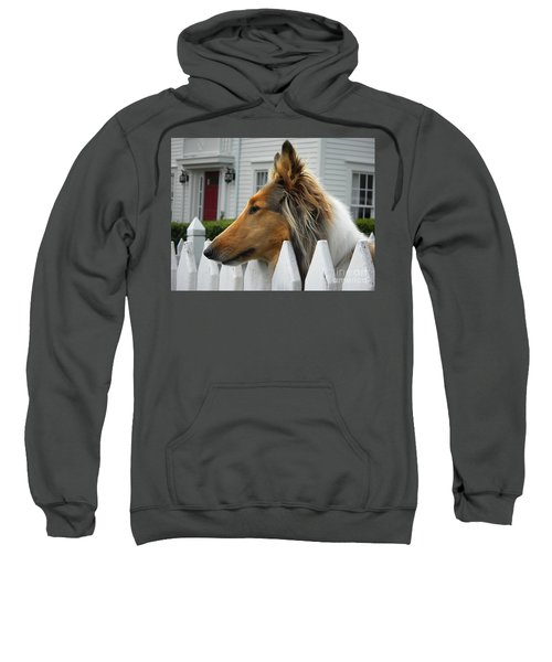 Bellingham Collie Sweatshirt