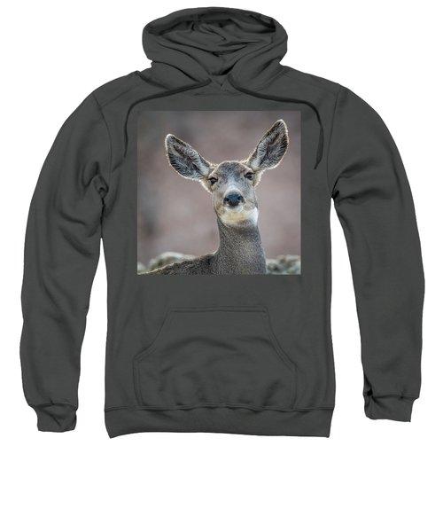 Big Eared Mule Deer Sweatshirt