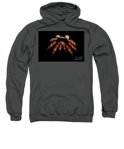 Big Hairy Tarantula Theraphosidae Isolated On Black Background Sweatshirt
