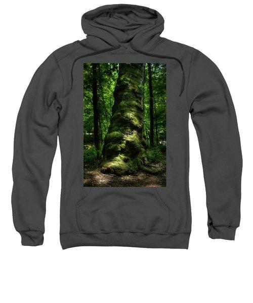 Big Moody Tree In Forest Sweatshirt