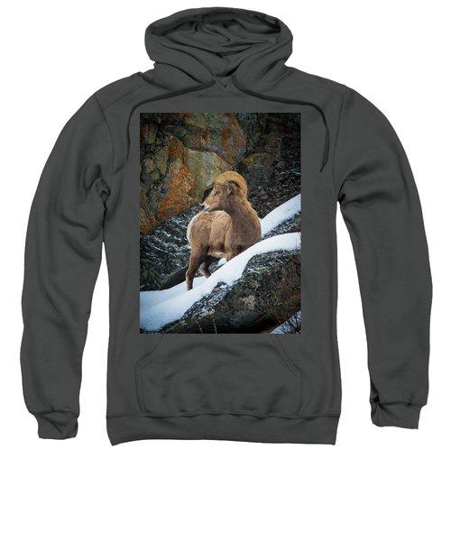 Bighorn Ram 1 Sweatshirt