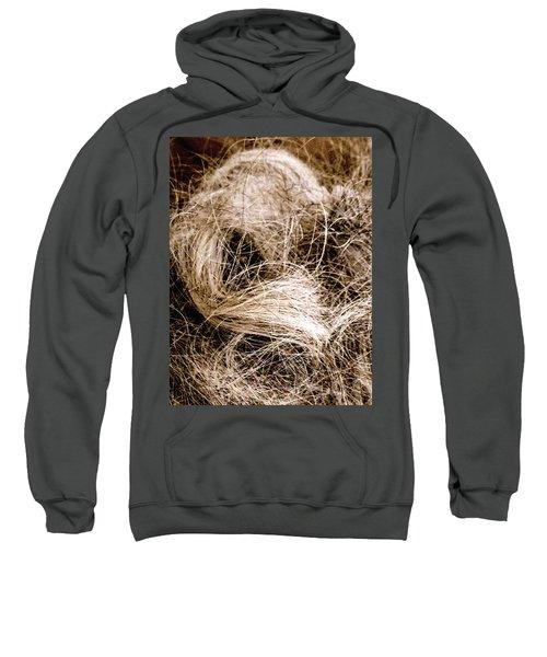 Bird Ape And Not Ape Bird Sweatshirt