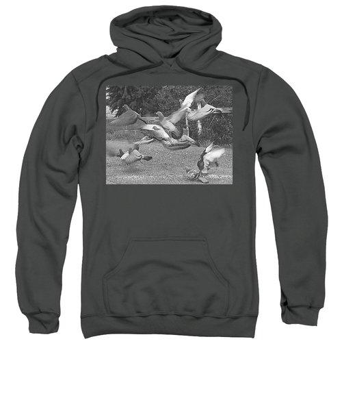 Bird Flurry Sweatshirt