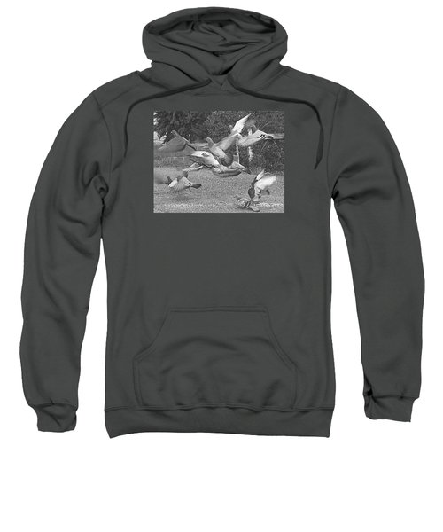 Bird Flurry Sweatshirt