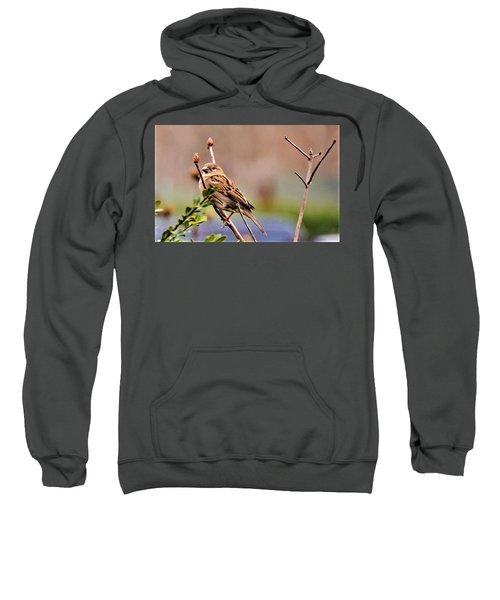 Bird In The Cold Sweatshirt