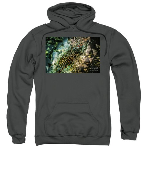 Bird Meets Glass Sweatshirt