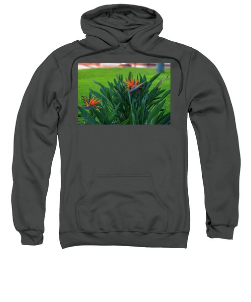 Birds Of Paradise, Vistoria Falls Hotel Sweatshirt