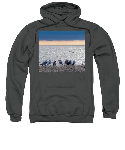 Birds On A Beach Sweatshirt