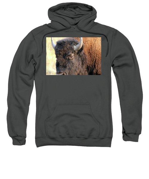 Bison Head Study Sweatshirt