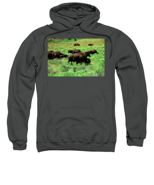 Bison2 Sweatshirt