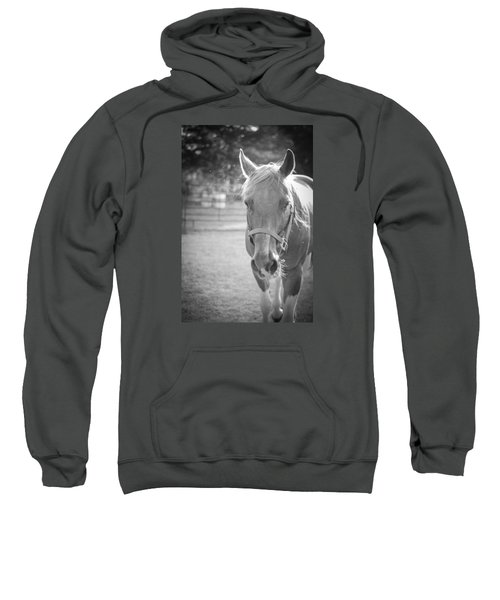 Black And White Portrait Of A Horse In The Sun Sweatshirt