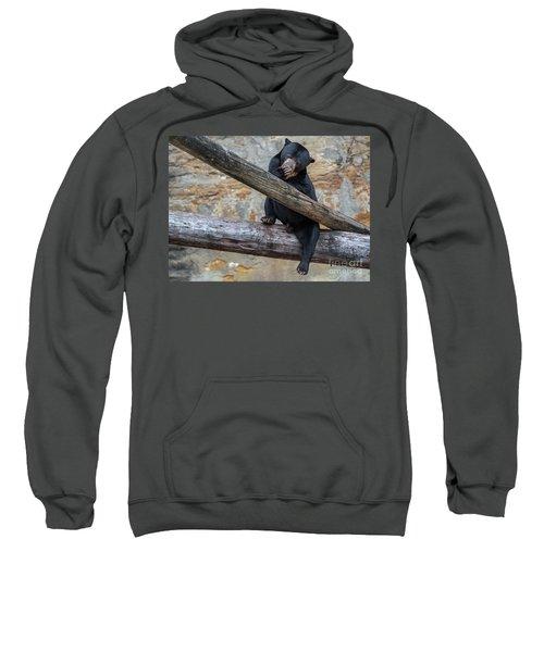 Black Bear Cub Sitting On Tree Trunk Sweatshirt