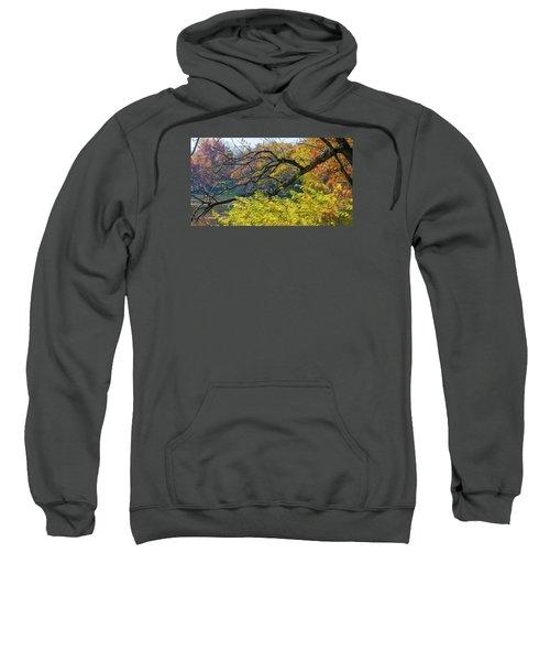 Black Branches Through Bright Autumn Trees Sweatshirt