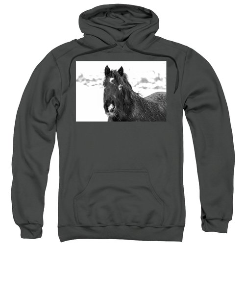 Black Horse Staring In The Snow Black And White Sweatshirt