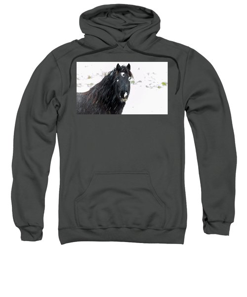 Black Horse Staring In The Snow Sweatshirt