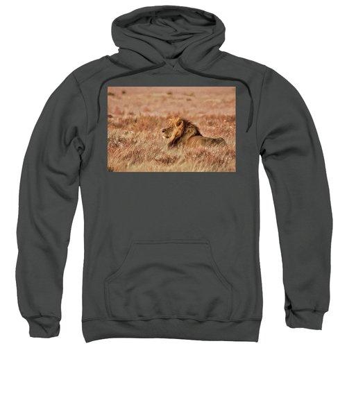 Black-maned Lion Of The Kalahari Waiting Sweatshirt