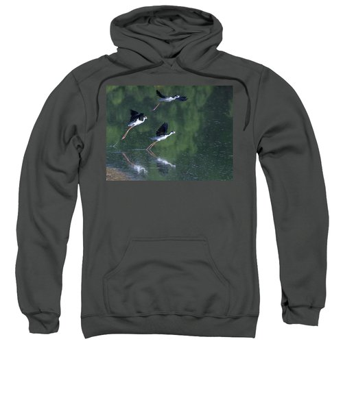 Black-necked Stilts 4302-080917-2cr Sweatshirt