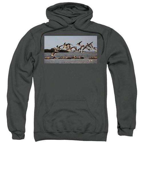 Black Skimmers In Flight Sweatshirt
