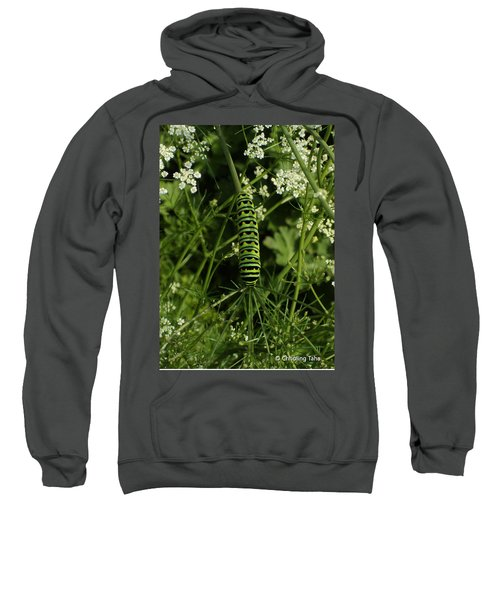 Sweatshirt featuring the painting Black Swallowtail Butteryfly Caterpillar by Chholing Taha